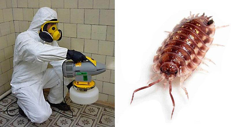 Дезинсекция в ванной от мокриц