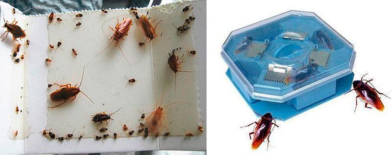 Ловушки для тараканов - эффективность и практичность