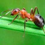 Садовые муравьи – польза или вред для сада и огорода?