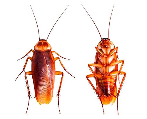 Как избавиться от тараканов в квартире раз и навсегда (в домашних условиях)