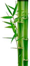 Бамбук от блох в Азии