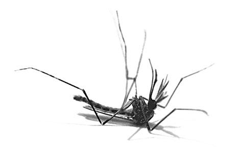 Воздействие пластин и фумигаторов на комаров