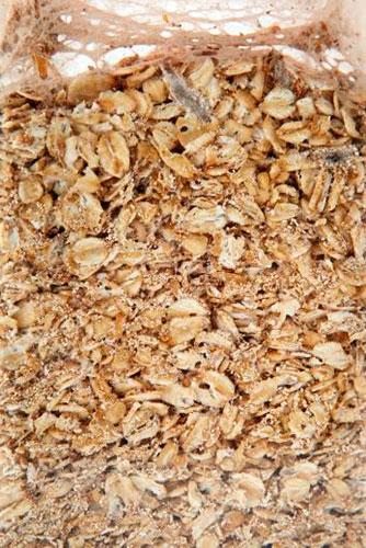 Пищевая моль в геркулесовой каше и крупах