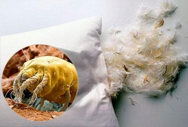 Пылевые клещи встречаются в подушках, матрасах, одеялах