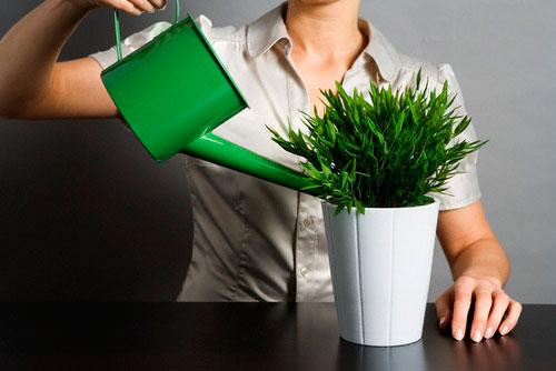 Не заливайте цветы, мошки любят сырость