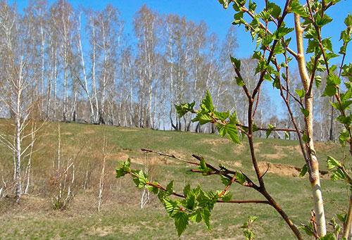 Весной начинается сезон активности клещей