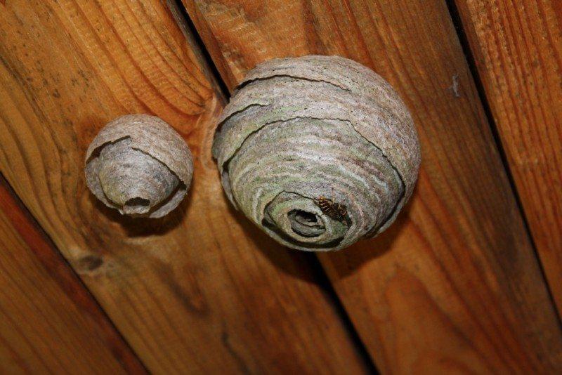 Осиное гнездо на балконе и лоджии