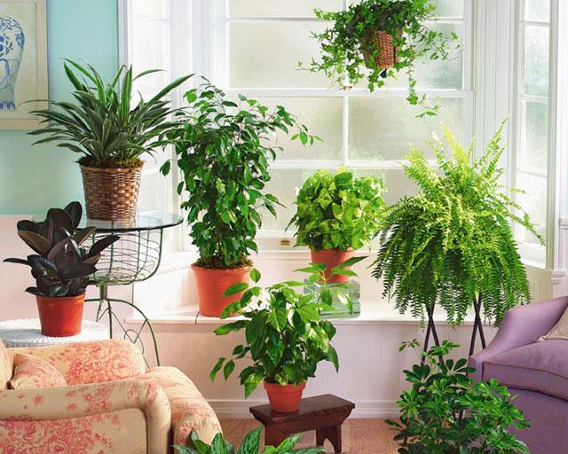 Комнатные растения помогут освежить воздух в комнате