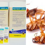 «Регент» от тараканов: описание, инструкция, отзывы покупателей