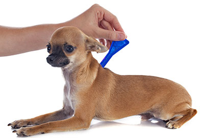 Средства от клещей для собак - какое выбрать?