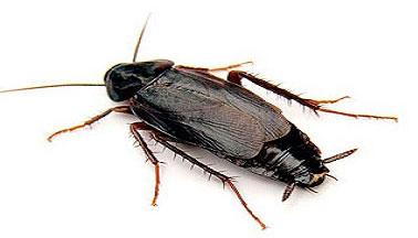 Черные тараканы снятся - к чему?