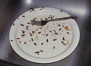 Тараканы портят пищу и распространяют болезни