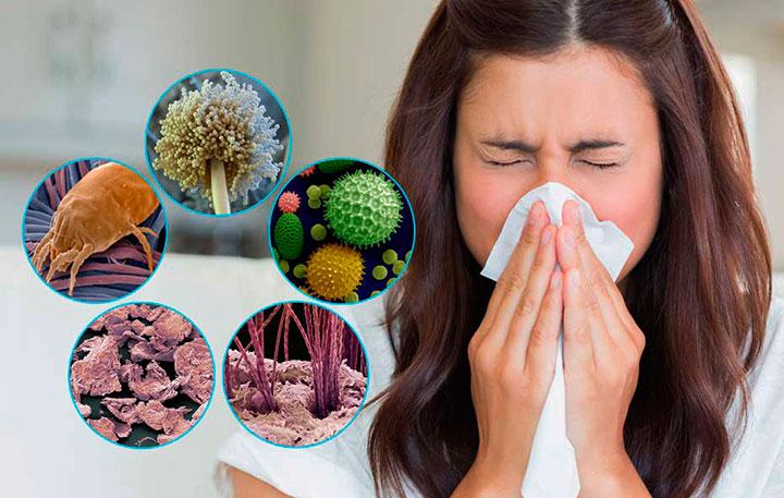 Аллергия на пылевого клеща: симптомы, лечение