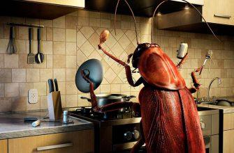 Откуда берутся тараканы в квартире?
