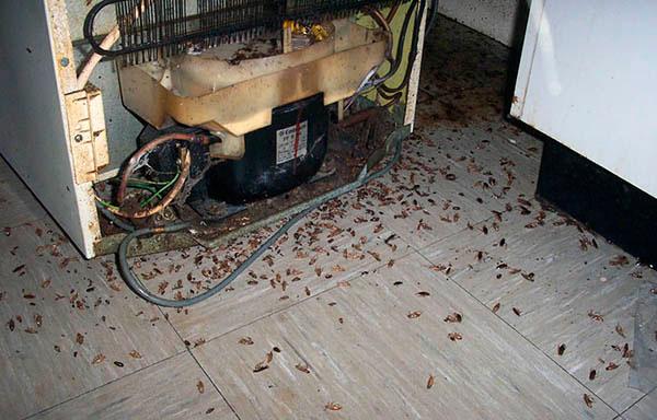 Где прячутся тараканы в квартире?