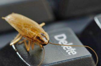 Где прячутся тараканы в квартире