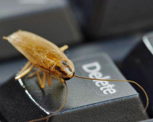 Тараканы в квартире: как избавиться, эффективные средства