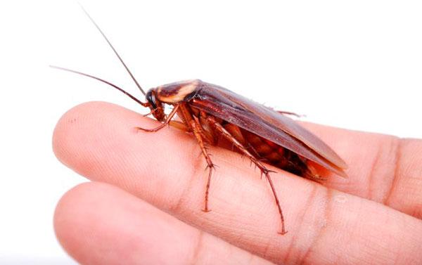 Фото укус таракана