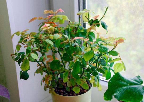 Как избавиться от паутинного клеща на комнатных цветках