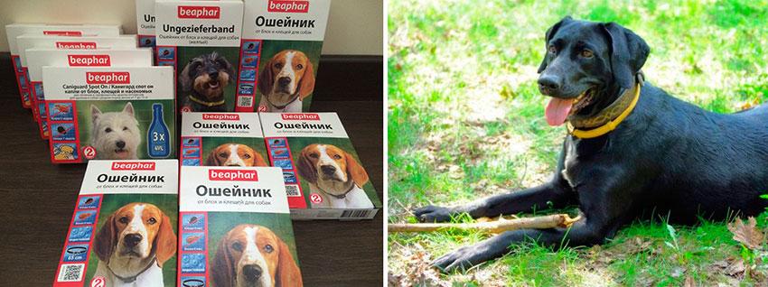Ошейник против блох для собак