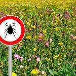 Опасны ли клещи в сентябре?