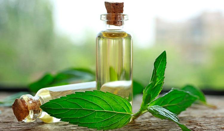 Эфирные масла от паразитов в домашних растениях