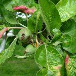 Тля на яблоне – как от нее избавиться? Эффективные способы борьбы