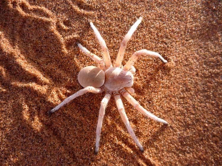 К чему снится белый паук? Сонник