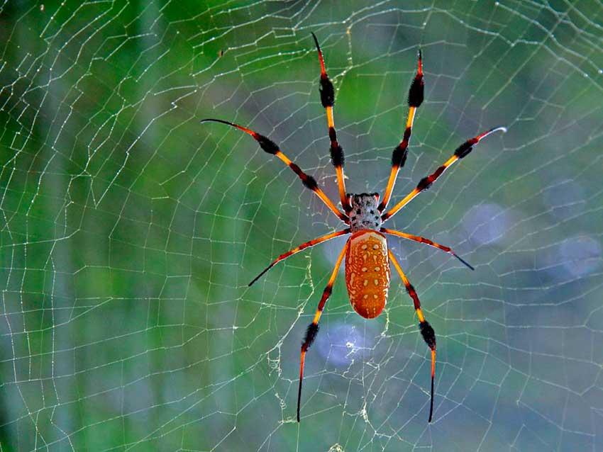 К чему снятся пауки в паутине - сонник