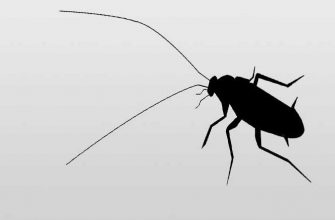 К чему снятся тараканы? Ответы из сонника