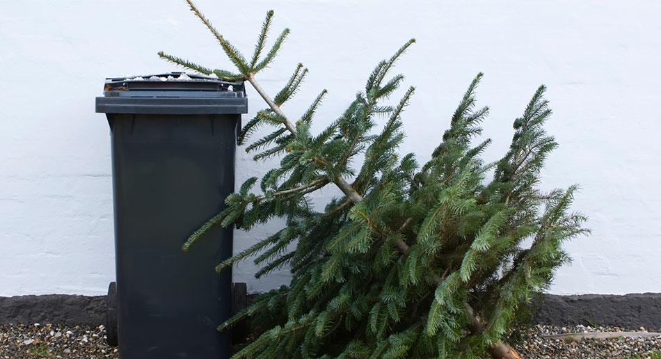 Новогодняя елка у мусорки