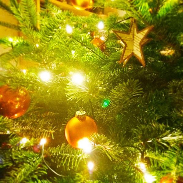 Клещи в новогодней елке - могут ли прятаться?