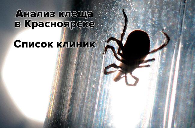 Анализ клеща в Красноярске и Красноярском крае на энцефалит и боррелиоз - список клиник