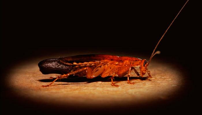 Боятся ли тараканы яркого света?