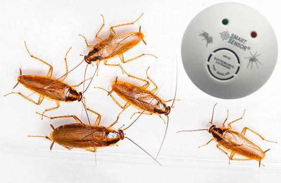 Боятся ли тараканы ультразвук и ультразвуковых отпугивателей?