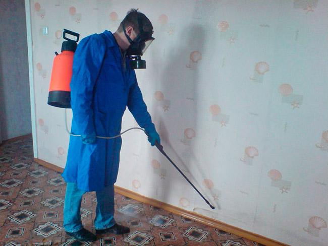 Обработка квартиры от насекомых Регент 800