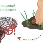 Клещевой энцефалит у человека – симптомы, лечение, профилактика