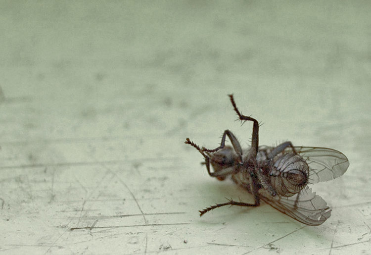 Борьба с мухами в деревянном доме эффективными способами