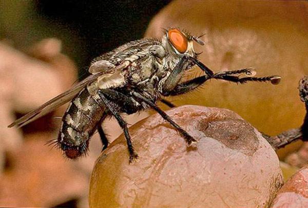 Мухи переносят опасные болезни и инфекции