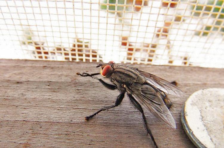 Антимоскитная сетка против мух