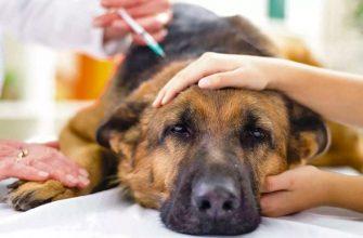 Может ли собака умереть от укуса клеща?