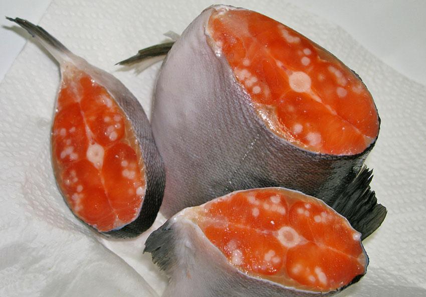 Глисты в рыбе – какие бывают, как выглядят и можно ли есть?
