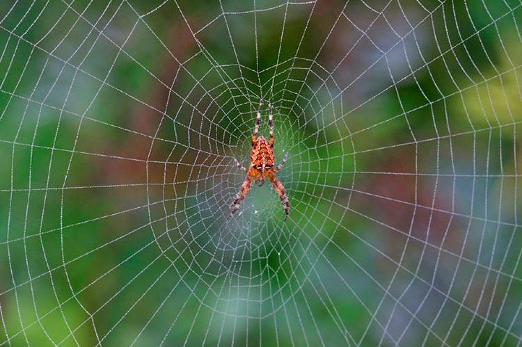 Как паук плетёт паутину?
