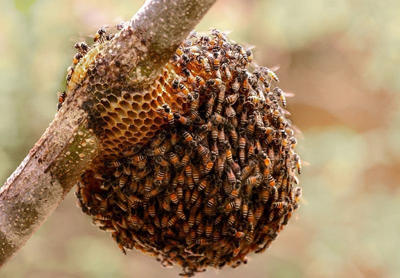 Пчлы зимой в сарае