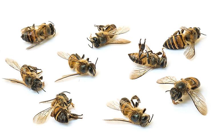 Пчелы погибли зимой