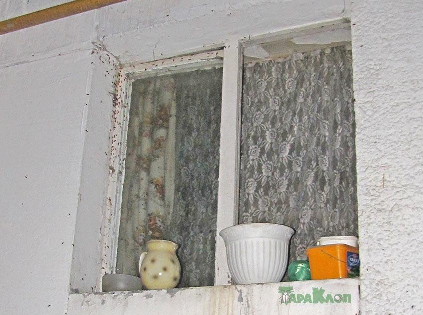 Тараканы лезут в окно квартиры